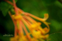 Fine Art Photography & Impressionist Style