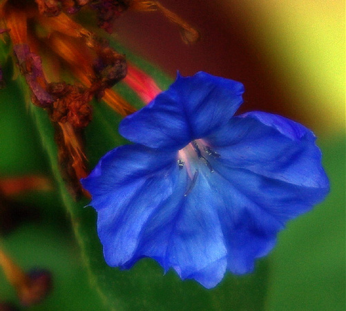 Soft painint like picture of deep blue flowers